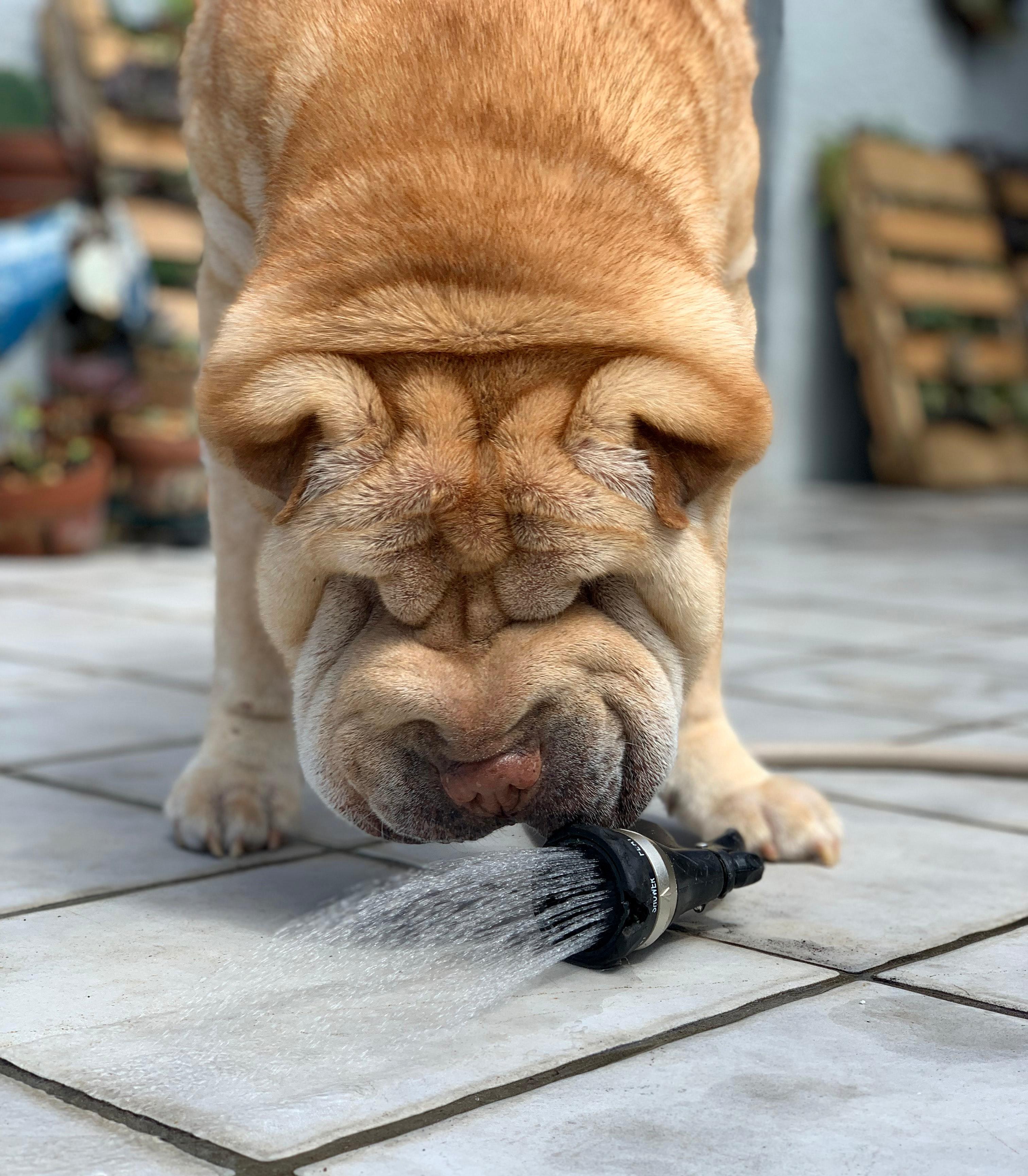 Hund trinkt nicht - hilfreiche Tricks und Tipps