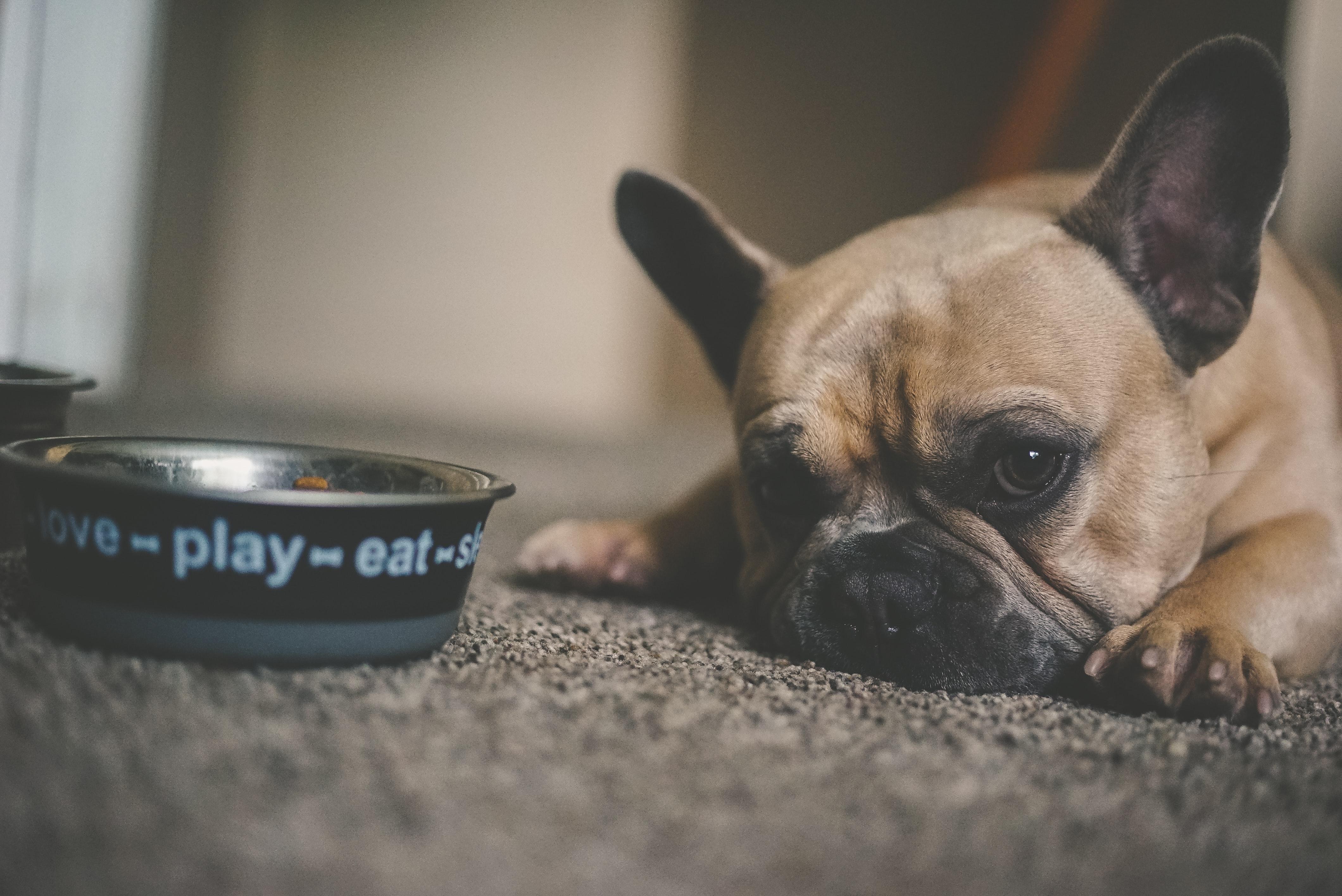 Trinkt mein Hund zu viel?