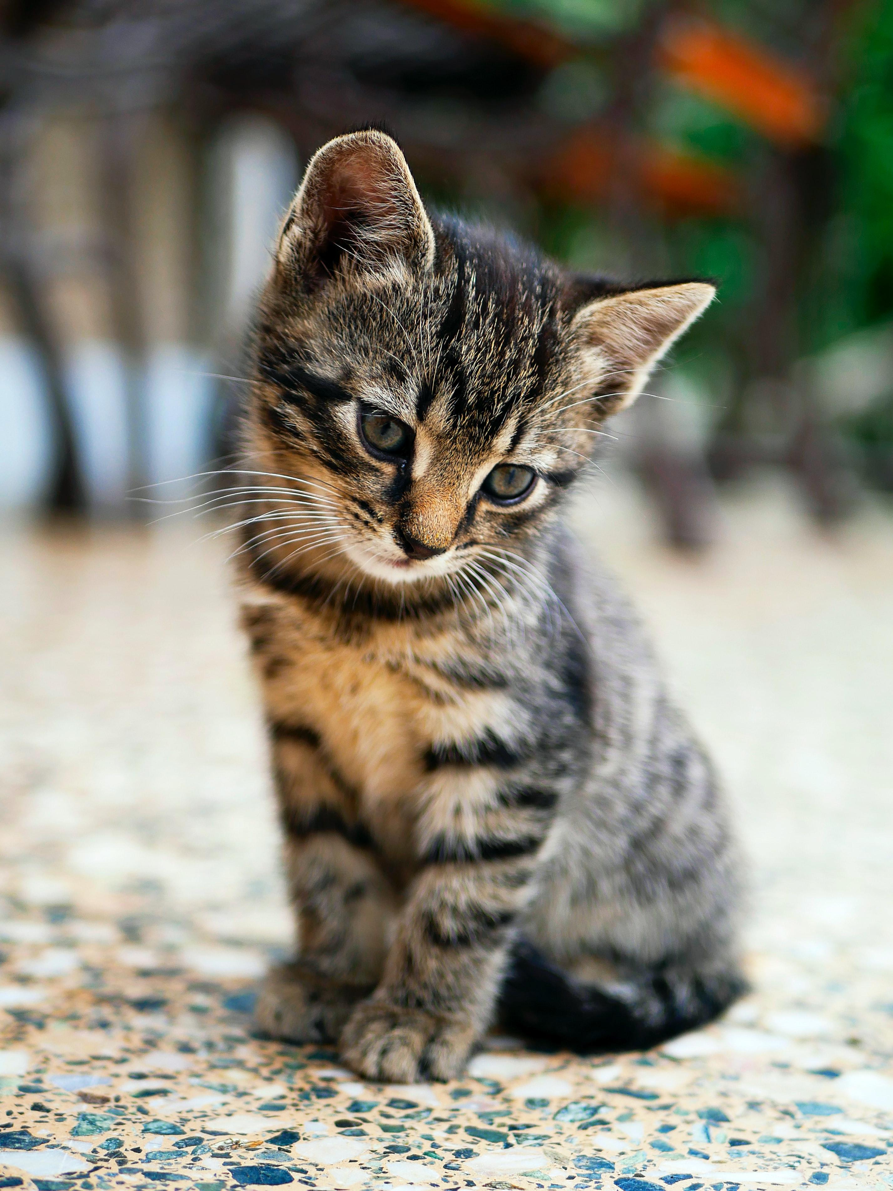 Futterumstellung: Junge Katzen